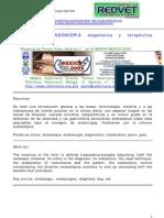 Endocirugía Veterinaria