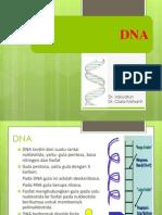 Kerusakan Dan Perbaikan DNA