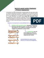 Fisio Informe (3)