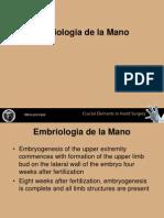 1_Embriologia_de_la_Mano