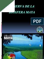 Reserva de La Biosfera Maya 1