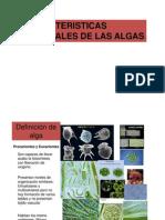 Caracteristicas de Las Algas