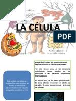 Presentaci+¦n CELULA