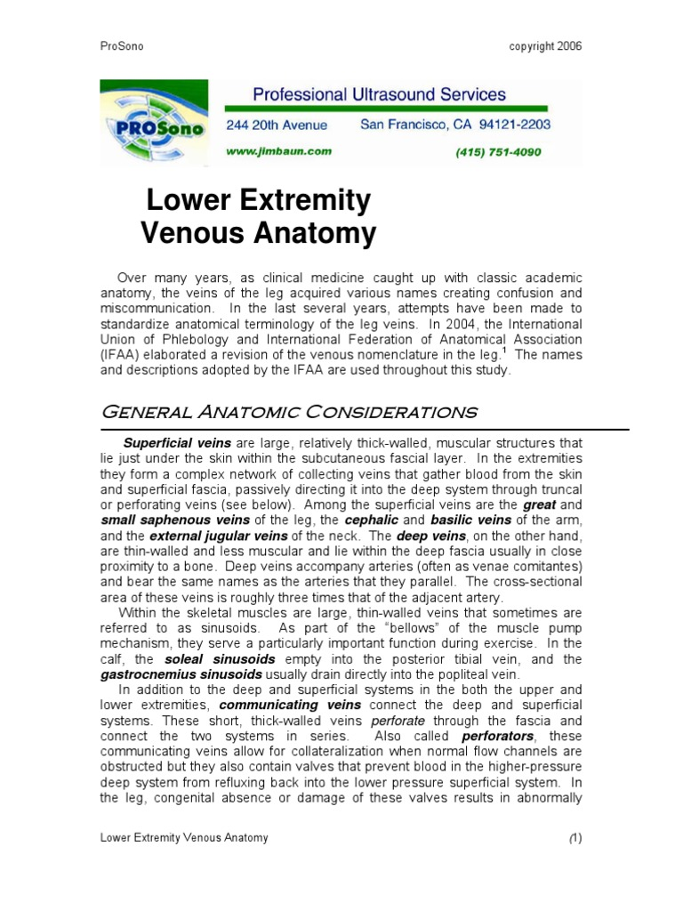 Vasc Chapter Le Venous Anatomy Vein Human Leg