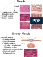 21. Muscles Contraction