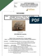 BoulweydouDEA-Sulcata-2008