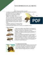 CARACTERÍSTICAS GENERALES DE LAS ABEJAS