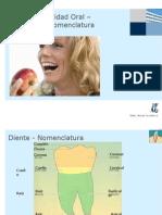 Dientes y Cavidad Oral – Anatomía y Nomenclatura