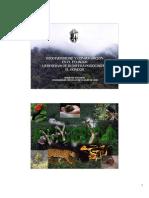 biodiversidadyconservacinenelecuadorlareservadebiosferapodocarpuselcondor-090915230440-phpapp01