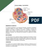 Funciones polinomiales de grado 3 y 4 pdf