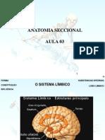ANATOMIA SECCIONAL (AULA 3).