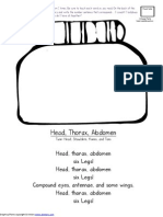 Head Thorax Abdomen
