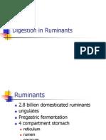 Ruminant Digestion