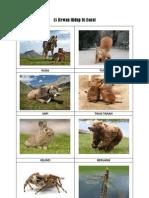 7200 Koleksi Nama Dan Gambar Hewan Darat Gratis