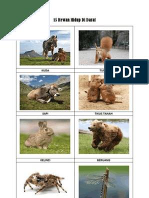 40 Gambar Hewan Air Dan Darat Gratis Terbaru