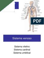 3_Venas_y_Arterias