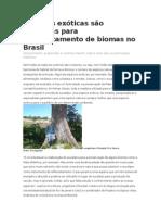 Espécies exóticas são utilizadas para reflorestamento de biomas no Brasil