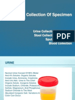 Collection of Specimen