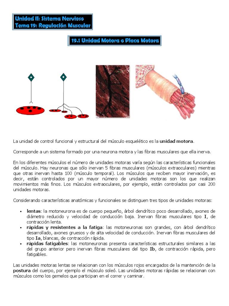 Asombroso Anatomía Muscular De Formación Colección de Imágenes ...