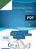 Bahagian-Bahagian Ikan Hiasan