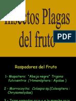 Plagas Del Fruto