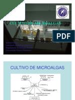 CULTIVO_DE_MICROALGAS[1]