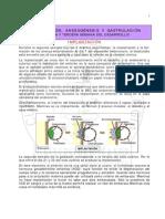 capitulo3implantacionanexosgastrulacion2010-101004160944-phpapp02
