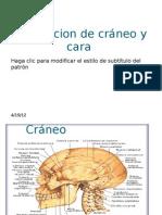 Exploracion de cráneo y cara