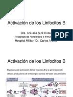 activacionlinfocitoB