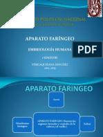 APARATO FARINGEO