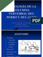 Columna Vertebral 1