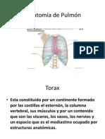 Anatomía de Pulmón_sandy