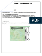 Maxillary 2nd Premolar