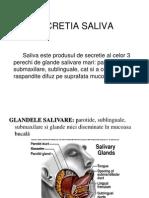 Secretia Saliva