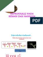 Reproduksi Pada Hewan Dan Manusia