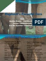 Elephant Parental Care New
