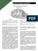 (Diaz Grigaites S. Al respecto de la anatomía cerebelosa. Buenos Aires. 2012)
