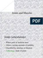 2 - Joints and Muscles Grays