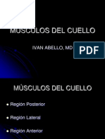 2-msculos-del-cuello-1228807513911837-9