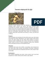 Tanaman adaptogenik