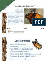 dele mariposas.pdf