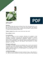 Vademecum Colombiano de Plantas Medic in Ales