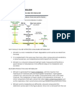 Bilirubin Production and Metabolism