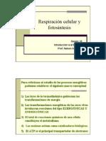 PPT Respiracion Celular