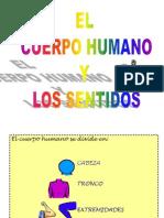 cuerpo-y-sentidos-tema-3-1195908203318518-4