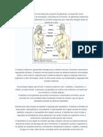 Sistema endocrino resumo