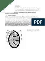 Resumo PV1 Embrio