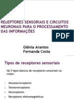receptoressensoriais-101216102204-phpapp02