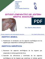 Sistema Genital Masculino-comparada