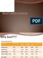 Beef Cattle Breeds Lecture1